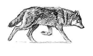 skal ulven leve